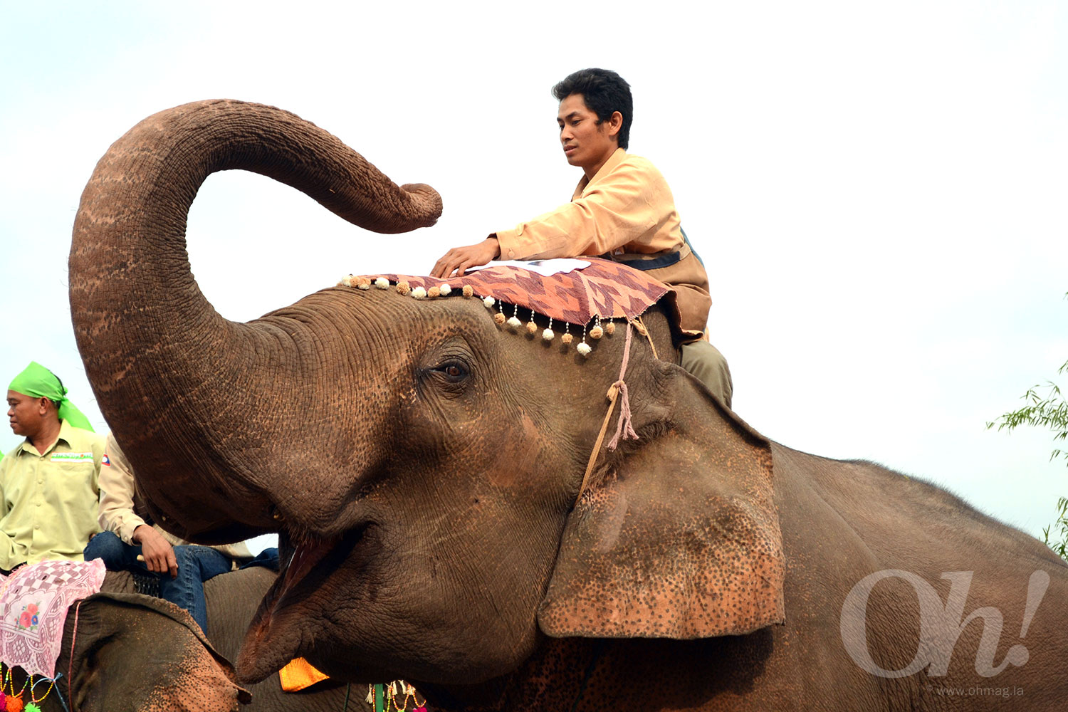 Elephant Festival at Sayaboury, Laos